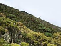 Vegetation in the Virunga Mountains. Overgrown detail of the Virunga Mountains in Africa (Uganda Royalty Free Stock Photography