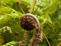 Vegetation von Madeira Lizenzfreie Stockfotografie
