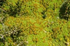Vegetation von Seno Otway - Patagonia - Chile Stockfotografie