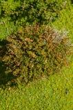 Vegetation von Seno Otway - Patagonia - Chile Lizenzfreie Stockfotografie