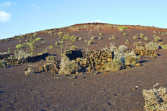 Vegetation in vulcanic area. Vulcanic landscape under the extincted vulcano Stock Photography