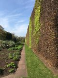 Vegetation wall in spring. Beautiful straight cut vegetation wall in spring Royalty Free Stock Image