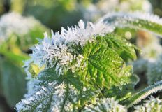 Vegetation in winter Royalty Free Stock Images
