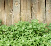 Vegetation and wooden fence Royalty Free Stock Photos