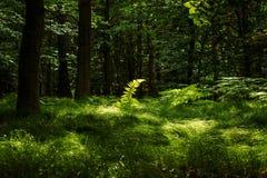 Vegetation, Woodland, Nature, Ecosystem royalty free stock photography