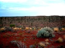 vegetation yulara Στοκ Φωτογραφία