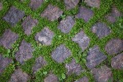 Vegetation zwischen den Pflastersteinen Stockfotos