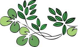 Vegetationblumenauslegung - Grünblätter Lizenzfreie Stockfotografie