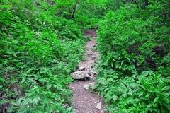 Vegetationpfad Lizenzfreie Stockbilder
