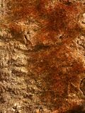 Red mossy on stone wall in spring. Vegetations on construction outside in journey stock photo