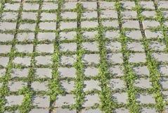 Vegetationsgitter Lizenzfreies Stockbild