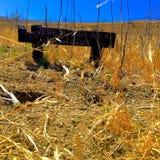 Vegetationszone Stockbilder