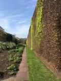 Vegetationvägg i vår Royaltyfri Bild