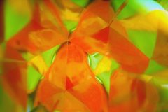 Vegetative background blur. Peach bright orange blurred perspective in a triangular mirror. royalty free stock images