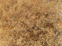 Vegetative background - desert bush. royalty free stock images