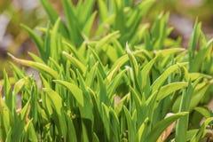 vegetative bakgrund Royaltyfri Fotografi