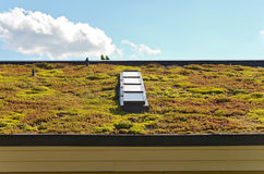 Vegetative Roof and Skylight Royalty Free Stock Image