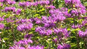 Vegetativer Hintergrund von den blühenden Pflanzen Stockfotografie
