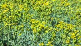 Vegetativer Hintergrund von den blühenden Pflanzen Lizenzfreie Stockfotografie