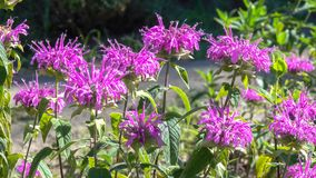 Vegetativer Hintergrund von den blühenden Pflanzen Lizenzfreie Stockfotos