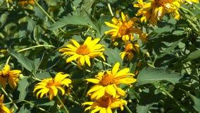 Vegetativer Hintergrund von den blühenden Pflanzen Stockfotos