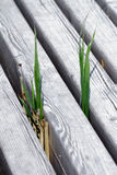 Vegetazione Fotografie Stock
