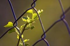 Vegetazione fotografie stock libere da diritti