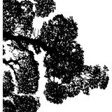 vegetazione Immagini Stock