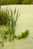 Vegetazione acquatica fotografie stock