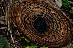 Vegetazione alla spiaggia rossa della rana, del Toro, Panama di Bocas Fotografia Stock