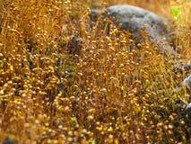 Vegetazione alpina Immagine Stock