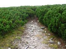 Vegetazione alpina Fotografia Stock