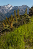 Vegetazione alpina in Nuova Zelanda Immagine Stock Libera da Diritti