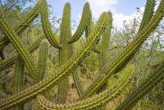 Vegetazione asciutta immagine stock