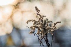 Vegetazione asciutta Primo piano sull'erba asciutta in molla in anticipo fotografie stock libere da diritti