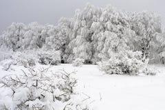Vegetazione bianca nella stagione di inverno Fotografia Stock
