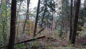 Vegetazione boschiva Fotografia Stock Libera da Diritti