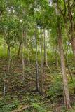Vegetazione boschiva della giungla Immagini Stock Libere da Diritti