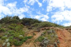 Vegetazione costiera su una cima della scogliera Immagine Stock Libera da Diritti