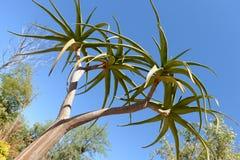 Vegetazione del deserto Fotografie Stock