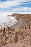 Vegetazione del deserto sull'isola di Incahuasi (Bolivia)) Fotografia Stock