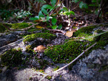 Vegetazione del sottobosco Fotografia Stock