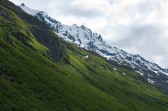 Vegetazione della montagna Fotografie Stock Libere da Diritti