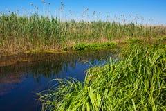 Vegetazione della riva del fiume Immagini Stock Libere da Diritti