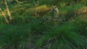Vegetazione densa sul bordo della foresta stock footage