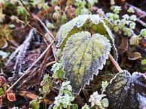 Vegetazione di inverno fotografie stock libere da diritti