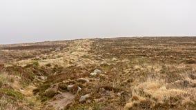 Vegetazione di Moorland su un plateau in montagne di Wicklow, Irlanda immagine stock libera da diritti
