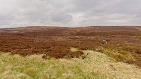 Vegetazione di Moorland su un plateau in montagne di Wicklow, Irlanda fotografie stock libere da diritti