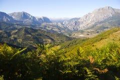 Vegetazione e montagne Immagini Stock