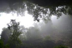 Vegetazione e nebbia Fotografia Stock Libera da Diritti